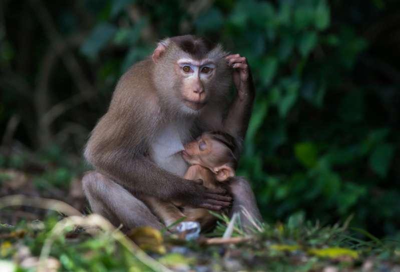 Qual è lo spirito animale che ti protegge, secondo lo zodiaco?Motherly Love Knows No Bounds And These Amazing Animal Photos Are A Proof