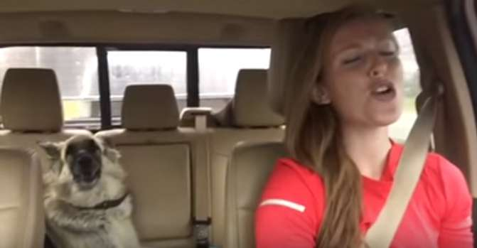German Shepherd Hears Her Favourite Song In The Car And Raises Her Head To Sing AlongGerman Shepherd Hears Her Favourite Song In The Car And Raises Her Head To Sing Along