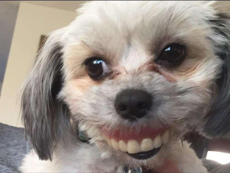 Собака похитила вставную челюсть хозяина и рассмешила пользователей Сети до слёз!