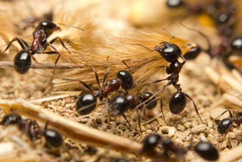 Cómo deshacerse de las molestas hormigas que invaden tu cocina o tu casa entera