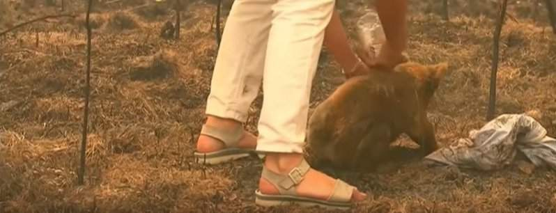 Not All Heroes Wear Capes: Brave Woman Saves Scorched Koala From Bushfire Wrapping Animal In Her Own ShirtNot All Heroes Wear Capes: Brave Woman Saves Scorched Koala From Bushfire Wrapping Animal In Her Own ShirtNot All Heroes Wear Capes: Brave Woman Saves Scorched Koala From Bushfire Wrapping Animal In Her Own ShirtNot All Heroes Wear Capes: Brave Woman Saves Scorched Koala From Bushfire Wrapping Animal In Her Own ShirtNot All Heroes Wear Capes: Brave Woman Saves Scorched Koala From Bushfire Wrapping Animal In Her Own Shirt