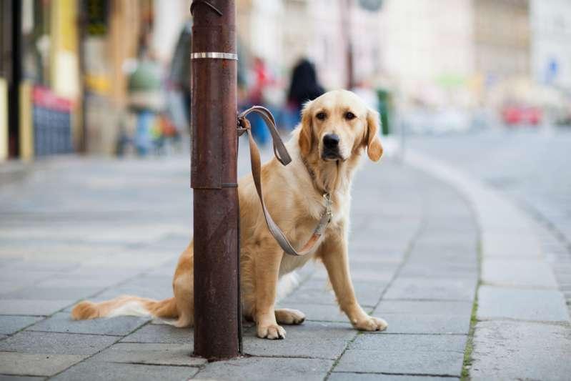 """Rescatan a un perro abandonado en el frío que venía con una nota desgarradora: """"él necesita amor"""""""