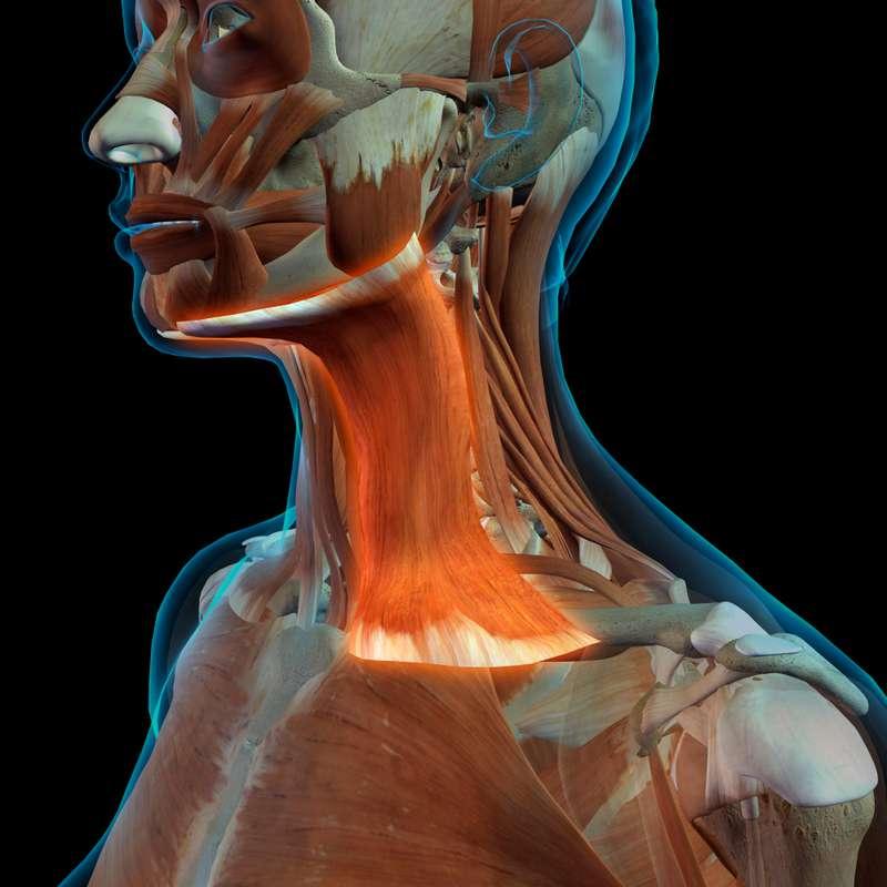 Le muscle de votre jeunesse : comment renforcer la zone du cou pour un effet optimal et sans lifting