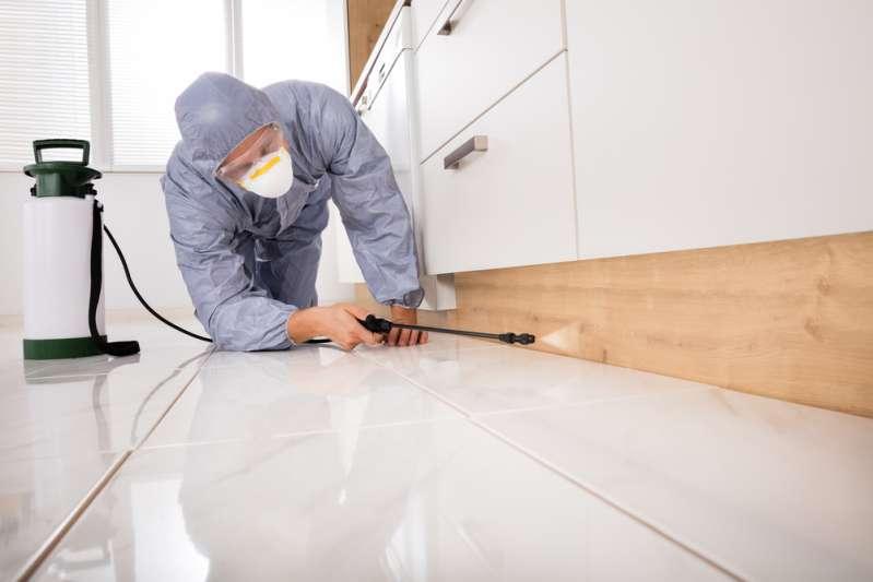 astuces d 39 exterminateur liminez d finitivement les fourmis chez vous gr ce ces 5 sur fabiosa. Black Bedroom Furniture Sets. Home Design Ideas