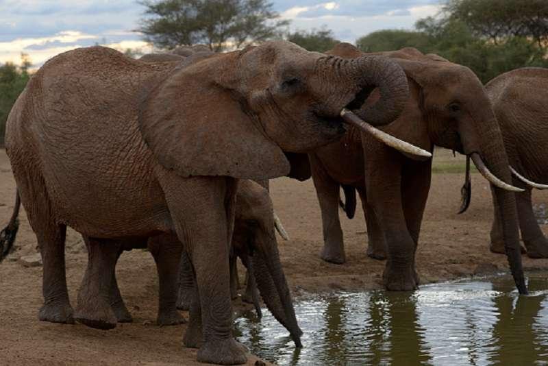 Elefanten trauern um ihren verstorbenen Anführer, jedoch wurde ihre Zeremonie von aufdringlichen Menschen gestört, die
