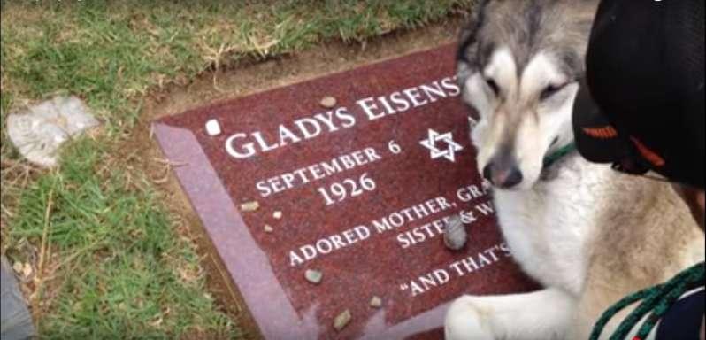"""""""Acho que caiu um cisco""""! Vídeo emocionante mostra cachorro chorando em túmulo de sua donas"""