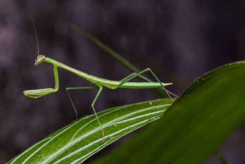 Un horoscope spécial : l'esprit insecte de chaque signe du Zodiaquemantis